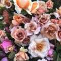 Get Acquainted With Roses Down Under—Soho Rose Farm x The Powder Room Rose Perfume Masterclass
